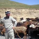 Животноводство, одно из выгодных сфер деятельности